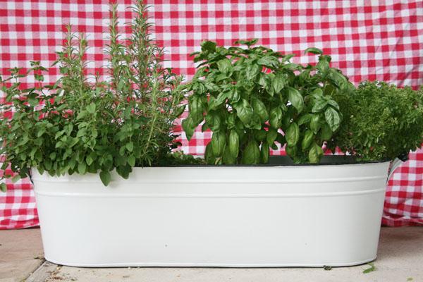 Go To Your Local Garden