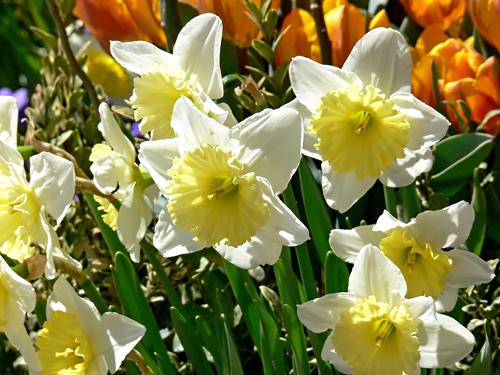 early-spring-garden1